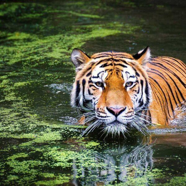 jungle safari in nepal